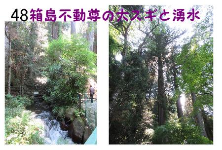 048番 箱島不動尊の大スギと湧水.jpg