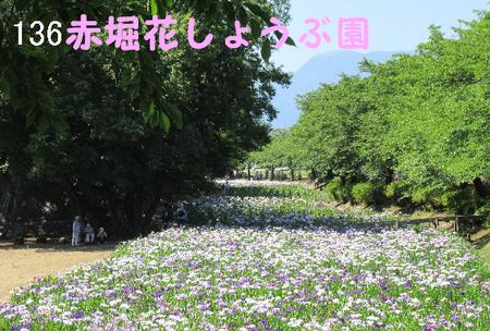 136番 赤堀花しょうぶ園.jpg