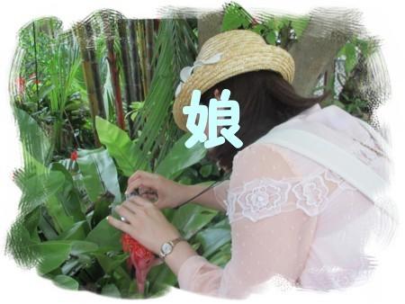 20140529 アナナス レイクガーデンinマレーシア (2).JPG