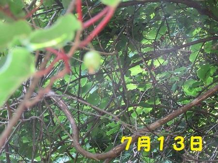 20150713 (4).JPG