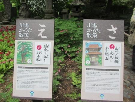 吉祥寺のヒメコマツ (2).JPG